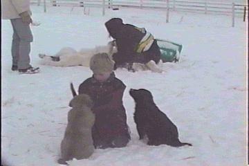 Grandson Jared and pups