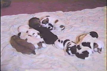 Nikita's pups