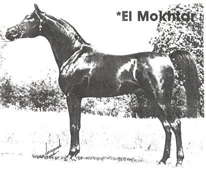 *EL MOKHTAR