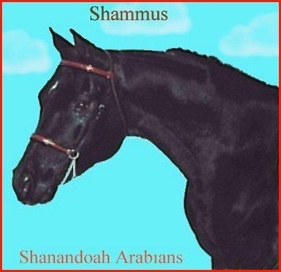 SHAMMUS