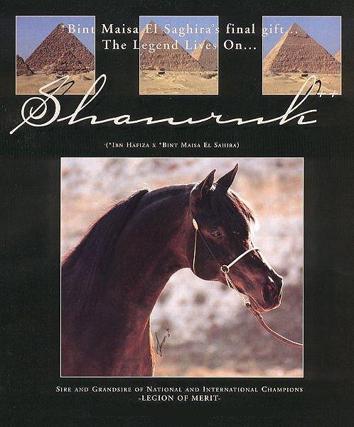 SHAMRUK++
